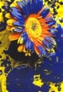 Virgo sign: blue and yellow flowers